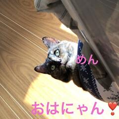 空/めん/猫/黒猫/にこ/くろ あらためておはようございます☀。 良いお…(2枚目)