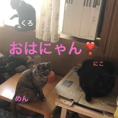空/めん/猫/にこ/くろ/黒猫 おはようございます☀ 今日は良いお天気😊…(2枚目)