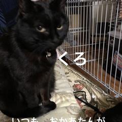 朝ご飯/にこ/くろ/黒猫/めん/猫/... 今日はバタバタ💦 とりあえず長女へ荷物を…