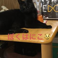 にこ/黒猫/癒し/猫飼のしあわせ/暮らし 今日はにこの特集にしてみました。 あどけ…