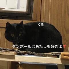 晩ご飯/めん/猫/にこ/くろ/黒猫 こんばんはです。今日も一日お疲れ様です。…(5枚目)