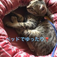 猫飼いのしあわせ/癒し/猫/めん/ちび 今日は長く1階にいてたので写真たくさん撮…(2枚目)