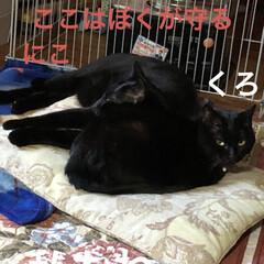 朝ご飯/猫/めん/黒猫/くろ/にこ 今朝も冷えますね。 猫さまたちそれぞれの…(6枚目)