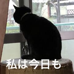 ストーブ前/くろ/にこ/黒猫/めん/猫/... おはようございます😊 冬らしい寒さです♪…(5枚目)