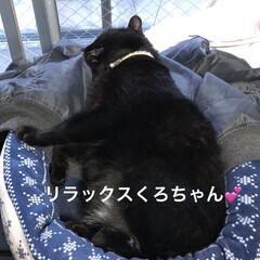 晩ご飯/めん/猫/にこ/くろ/黒猫 こんばんはです。 今日も一日お疲れ様でし…(2枚目)
