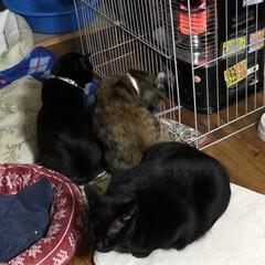 朝ご飯/猫/めん/黒猫/にこ/くろ/... 今朝の我が家。早朝から3匹と1人でストー…