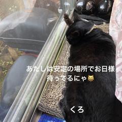 朝ご飯/黒猫/くろ/にこ/猫/めん 今朝の猫さまたち。くろもにこもめんも朝は…(10枚目)