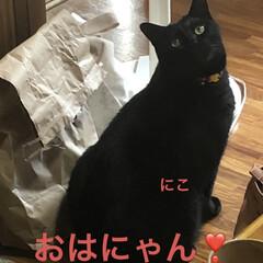空/黒猫/くろ/にこ/猫/めん おはようございます。 早朝はお日様見えて…(4枚目)