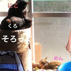 癒し/猫飼いのしあわせ/めん/猫/黒猫/にこ/... 今日は本当に良いお天気です。リビングの片…(10枚目)