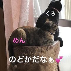 めん/猫/くろ/にこ/黒猫 のんびり休日。猫さまたちもまったり過ごし…(1枚目)