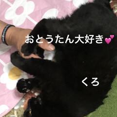 晩ご飯/めん/猫/にこ/くろ/黒猫 昨夜の晩御飯はカレー🍛もともと金曜日だっ…(2枚目)