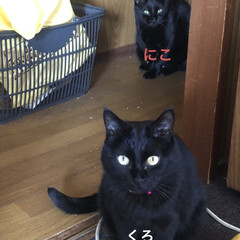 めん/猫/にこ/くろ/黒猫 こんにちはです😊 今日の猫さまたちはよく…(4枚目)