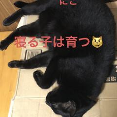 晩ご飯/めん/猫/にこ/くろ/黒猫 昨夜の晩御飯はカレー🍛もともと金曜日だっ…(4枚目)