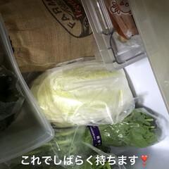 野菜室/冷蔵庫の中 昨日野菜室がガラガラになり明日のカレー曜…(4枚目)