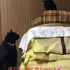 晩ご飯/くろ/にこ/黒猫/猫/めん/... 今日も一日お疲れ様です。普段散らかってる…(5枚目)