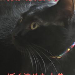 癒し/猫飼いのしあわせ/めん/にこ/黒猫/猫 可愛い写真に勝手にアフレコしてみました🤣…