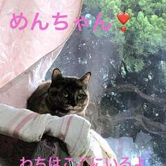 朝ご飯/猫/めん/黒猫/くろ/にこ 今朝も冷えますね。 猫さまたちそれぞれの…(8枚目)