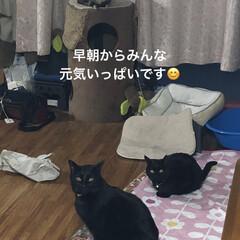 紫芋/庭/ルーク/くろ/にこ/黒猫/... おはようございます。天気のせいかなんとな…(6枚目)