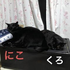 めん/にこ/くろ/黒猫/癒し/猫飼いのしあわせ/... やっと猫様たち寝つきました💤 さっきまで…