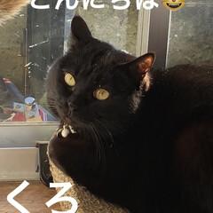 めん/猫/にこ/くろ/黒猫/癒し/... 今日の猫さまたちは元気いっぱい❣️ にこ…