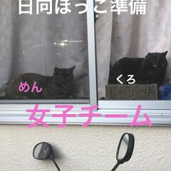 空/めん/猫/にこ/くろ/黒猫 おはようございます☀ いいお天気です。ゴ…(2枚目)