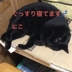 晩ご飯/めん/猫/にこ/くろ/黒猫 こんばんはです。 今日も一日お疲れ様です…(6枚目)