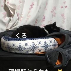 晩ご飯/癒し/猫飼いのしあわせ/めん/猫/にこ/... こんばんは。今日も一日お疲れ様です。 今…(5枚目)