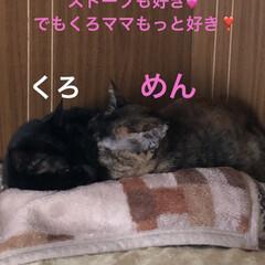 猫/めん/黒猫/にこ/くろ/ストーブ/... 寒い朝です。いつものようにストーブぬくぬ…(4枚目)