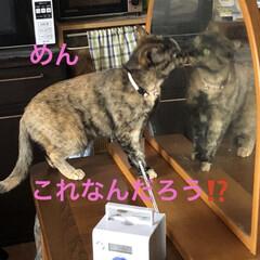 癒し/猫飼いのしあわせ/めん/猫/黒猫/にこ/... 今日は本当に良いお天気です。リビングの片…(4枚目)