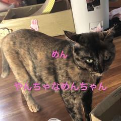 黒猫/くろ/にこ/猫/めん 今日の猫さまたち😼😺😸 やっぱりわかるん…(2枚目)