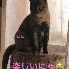 黒猫/くろ/にこ/猫/めん こんにちは😊 良いお天気ですね。 気候が…(3枚目)