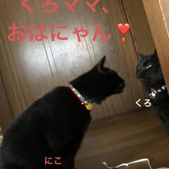 朝ご飯/めん/猫/にこ/くろ/黒猫 おはようございます☀ 良いお天気です。朝…(2枚目)