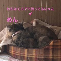 朝ご飯/空/癒し/猫飼いのしあわせ/猫/めん/... おはようございます。 今日は晴れてくるそ…(4枚目)