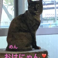 朝ご飯/空/晩ご飯/にこ/くろ/黒猫/... おはようございます☀ 連休明け平常が戻り…(3枚目)