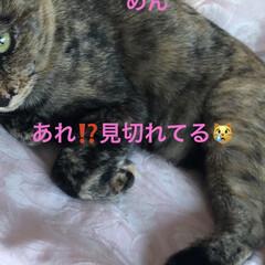 晩ご飯/めん/猫/にこ/くろ/黒猫 昨夜の晩御飯はカレー🍛もともと金曜日だっ…(3枚目)