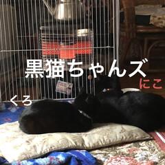 ストーブ/にこ/くろ/黒猫/めん/猫 とりあえずゆっくりしようとリビングのスト…(6枚目)