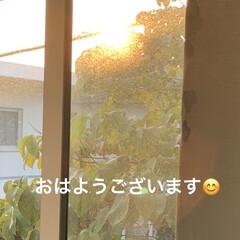 モーニングセット/花のある暮らし/おうちごはん/簡単 おはようございます😃 今日もいい天気です…