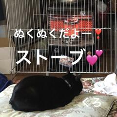 空/黒猫/にこ/くろ/猫/めん おはようございます。 朝の空はきれいでし…(4枚目)