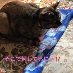 猫飼いのしあわせ/癒し/猫/めん/ちび 今日は長く1階にいてたので写真たくさん撮…(3枚目)