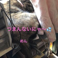 購入品/お昼ご飯/黒猫/くろ/にこ/猫/... 今日は朝からなんかシャワー浴びたくなるほ…(2枚目)
