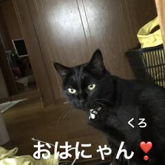 空/にこ/くろ/黒猫/めん/猫 おはようございます☀ 暑い😵掃除して洗濯…(2枚目)