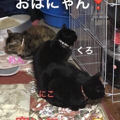 朝ご飯/黒猫/くろ/にこ/猫/めん おはようございます❣️ ただただ寒い😨猫…(1枚目)
