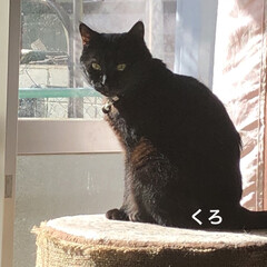 猫/めん/黒猫/くろ/にこ/癒し/... 午前中は静かに寝ていた猫たち。 お昼ご飯…(1枚目)