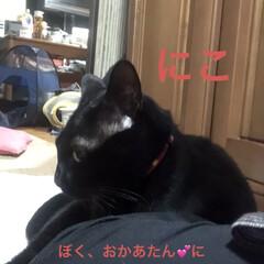 黒猫/にこ/癒し/猫飼いのしあわせ 今日はにことめんがじゃれあいなのか追いか…(1枚目)
