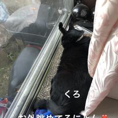 空/にこ/くろ/黒猫/猫/めん おはようございます☀ いいお天気です。そ…(2枚目)