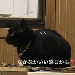 晩ご飯/めん/猫/にこ/くろ/黒猫 こんばんはです。今日も一日お疲れ様です。…(6枚目)