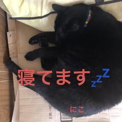 朝ご飯/空/黒猫/くろ/にこ/猫/... おはようございます☀ 気持ちのいい朝です…(8枚目)