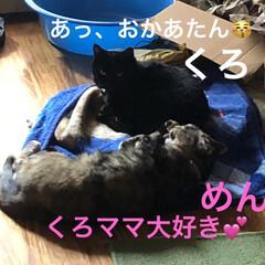 くろ/黒猫/めん/癒し/猫飼いのしあわせ/猫 あーまた撃沈してしまい起き上がれなかった…