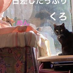 空/朝ご飯/めん/くろ/猫/にこ/... おはようございます。今朝は何だか眠くて1…(3枚目)