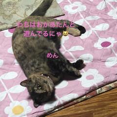 黒猫/くろ/にこ/猫/めん 朝ご飯食べて遊びタイム。(2枚目)